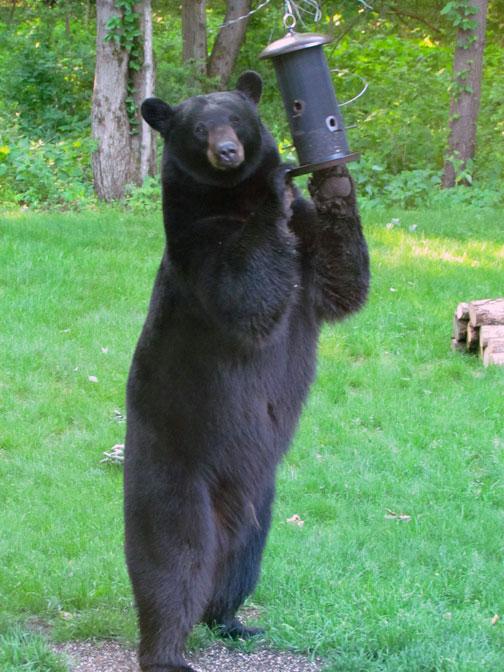 Bear At The Bird Feeder Steel Kaleidoscopes